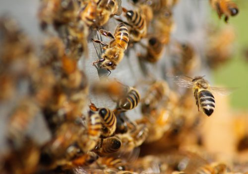 La Le Lu website bilder tiere bienen